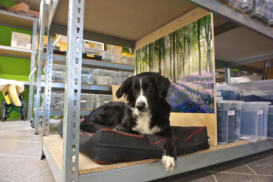 Von Bürohunden und Hundetagesstätten